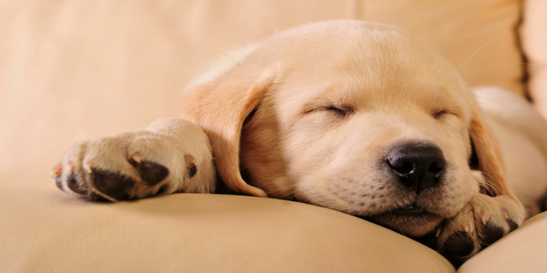 5 Life-Hacks to Adjust Your Spam Score…and a Puppy